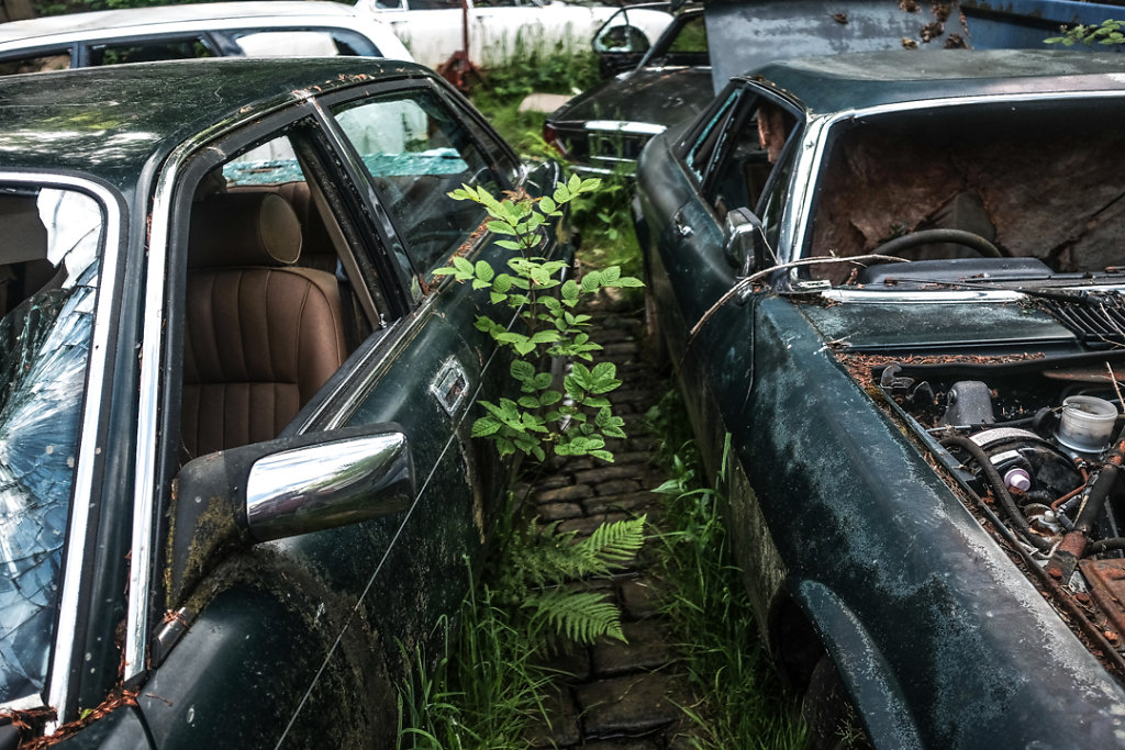 The Jaguar Graveyard